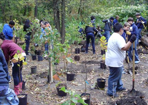Students in our education program planting and mulching trees in upstate New York.