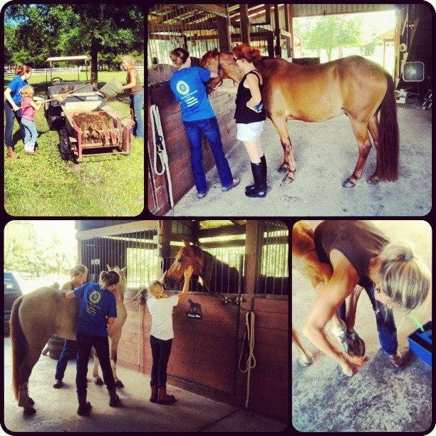 Equine Assisted Learning teaches trust, perspective, self-acceptance,  & decreased isolation.
