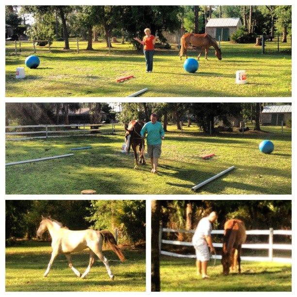 Equine Assisted Learning teaches team building.