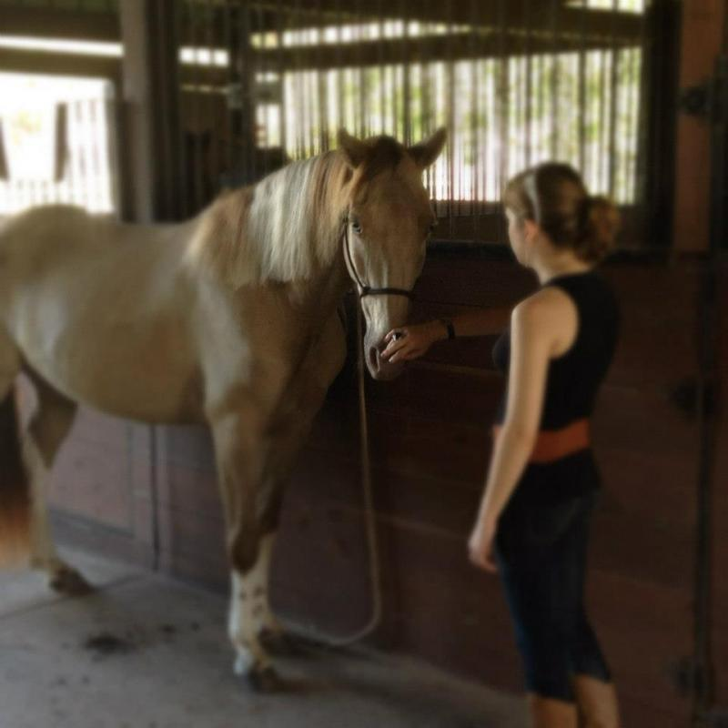 We've had survivors travel from out of the USA to visit our Equine Facility.