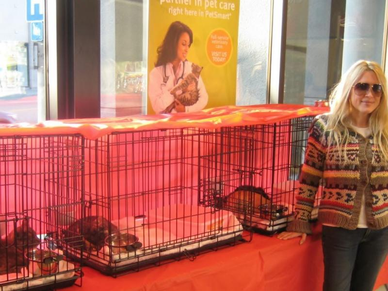 Kris Kelly Foundation cat adoptions at Petsmart