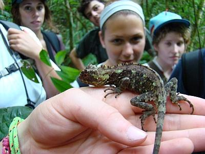 Field courses explore tropical forest