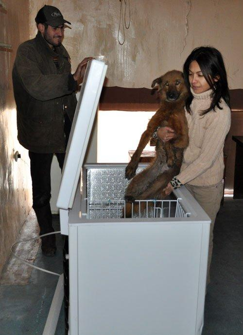 Freezer at Save the Animals-Armenia shelter-bought with AKI $$