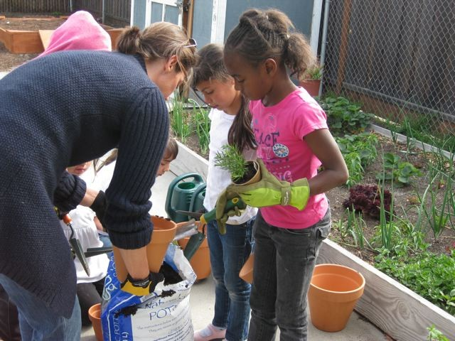 Young urban farmers get down to it
