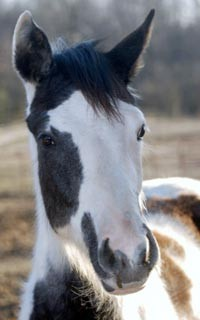 ALDF vs. Keating: Gracie, a beautiful young foal, rescued from dire conditions
