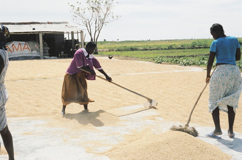 Sweeping grains at a Lambi Fund grain mill