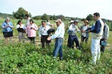 Mexican habitat restoration field planted to attract bees, butterflies and birds.