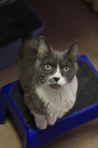 Miss Holly, found near death in a foreclosed home, was adopted!