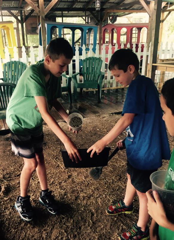 Campers work together on farm chores daily