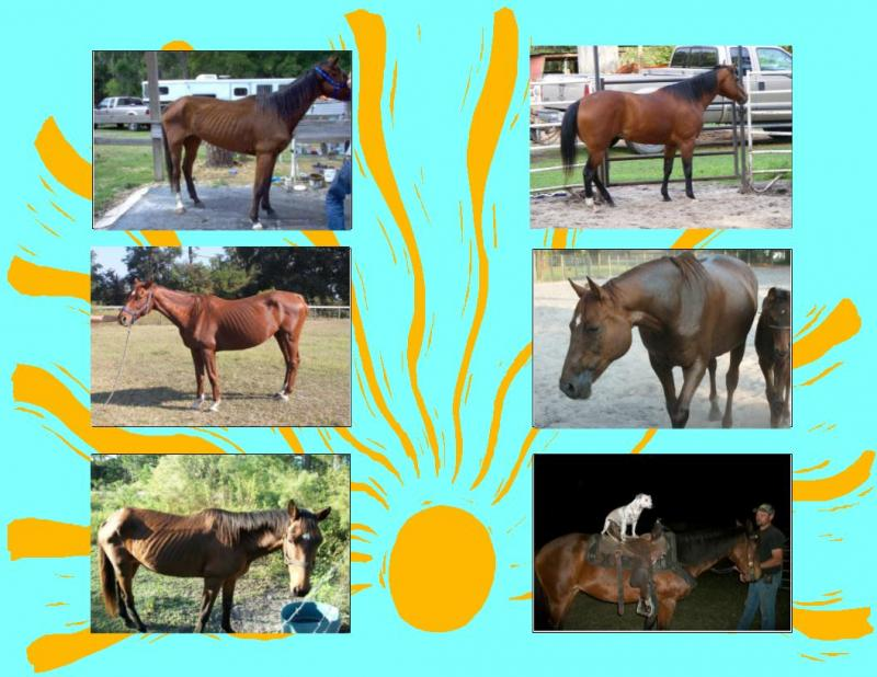 Before and after pictures of horses we have helped.