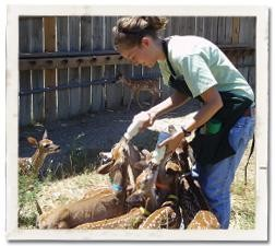 WRR Staff Feeding Fawns