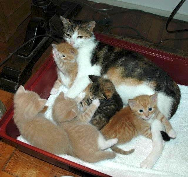 Mom & Kittens