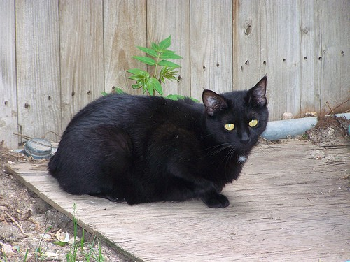 Kroger, a young feral with several babies, was trapped at a King Soopers, then sent to foster .
