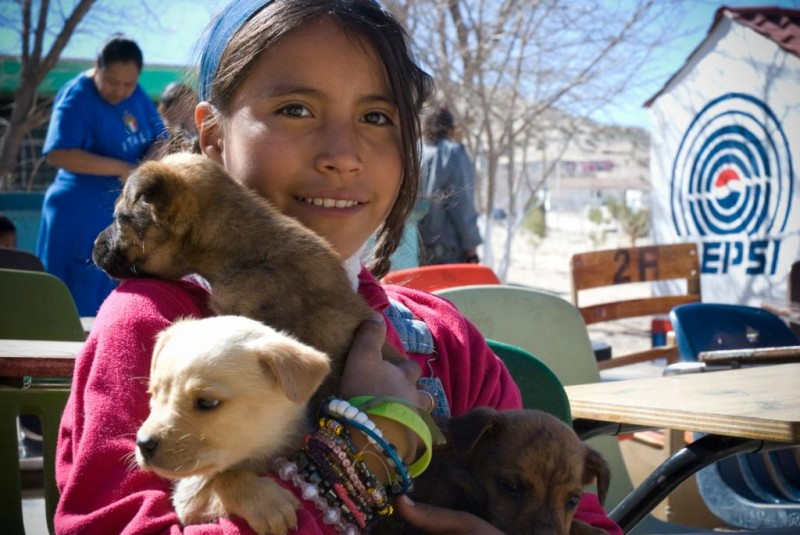 Spay and Neuter Clinic Ciudad Juarez