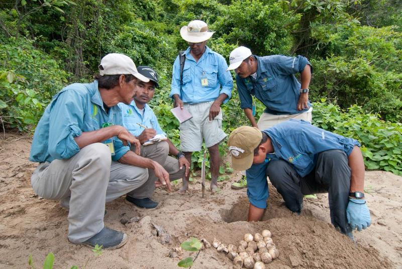 Paso Pacifico Turtle Rangers inspect a sea turtle nest and evaluate the number of successful hatchlings.