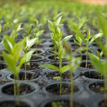 saplings © Scott Warren
