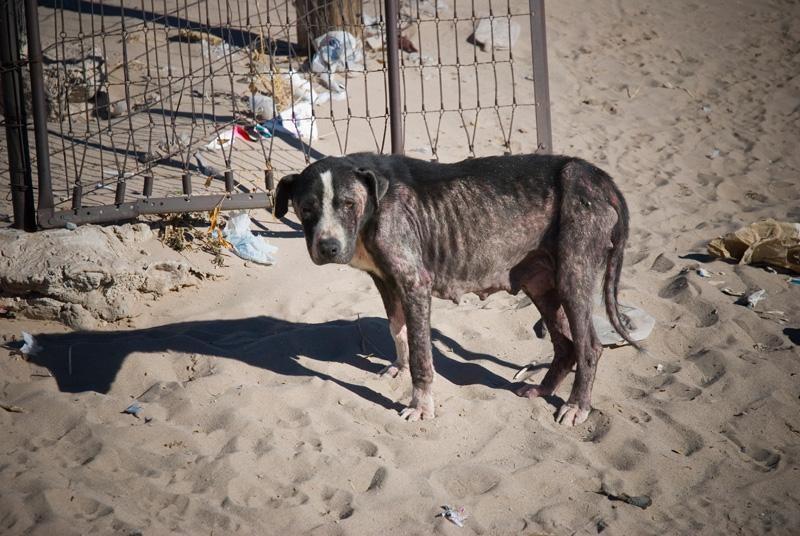 Mexico Street Dog