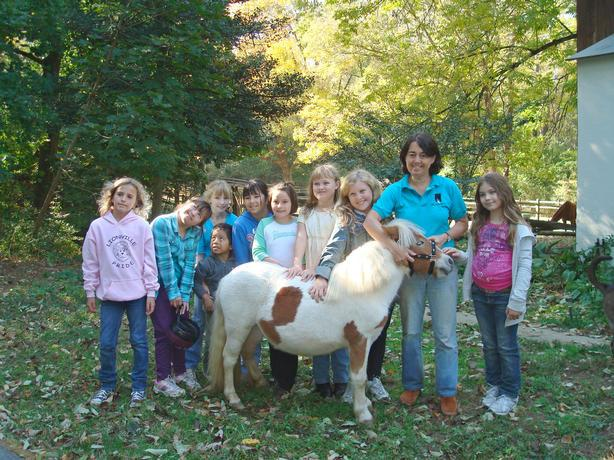 Girl scouts come to earn their horse fan badge.