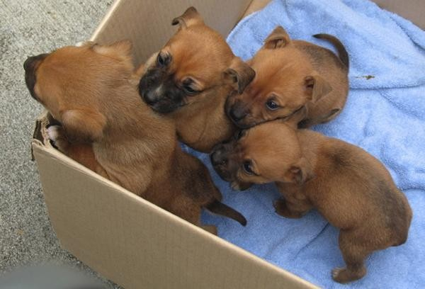 We offer help with spay and neuter to help reduce the number of unwanted litters.