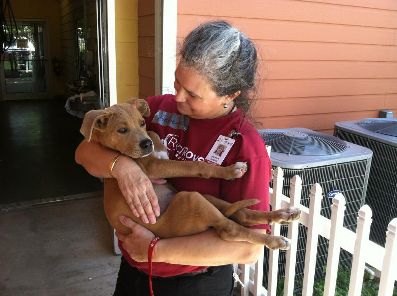 A RedRover Responders volunteer comforts a puppy following a flood.