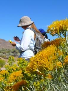 Rare Plant Treasure Hunters record data in the California desert.