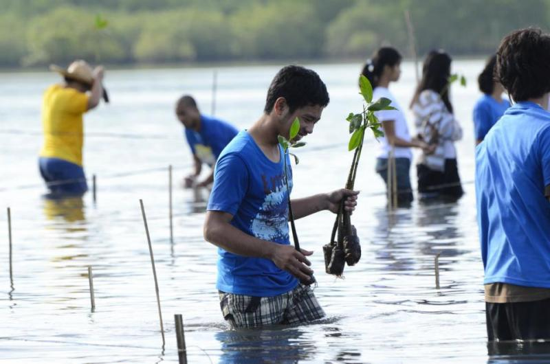 Mangrove tree planting in the Philippines