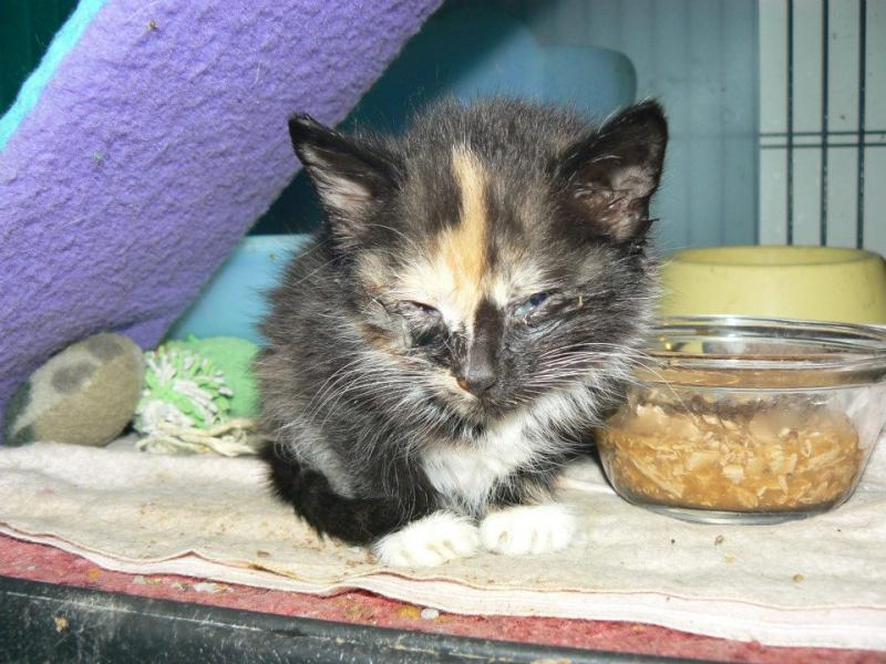 We give sick and malnourished kittens the care they need to get forever homes.