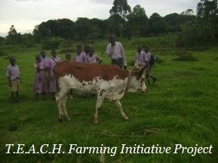T.E.A.C.H. Farming Initiative in Uganda Africa