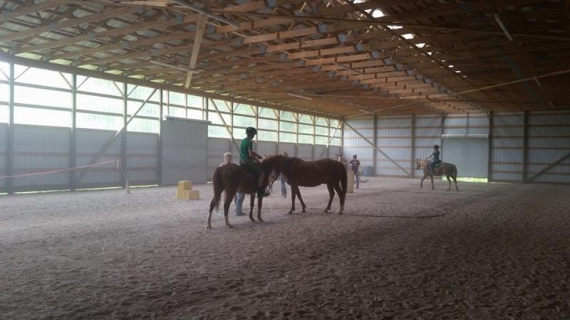 Our training program. Busy getting our horses ready for their forever home.