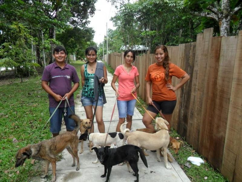 Volunteers walking dogs at our No-Kill Shelter.