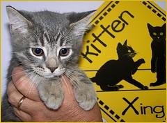 Kitten Crossing, Cubby.