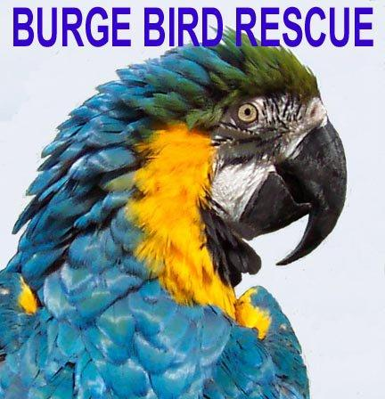 Burge Bird Rescue Logo