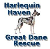 Harlequin Haven Great Dane Rescue Logo