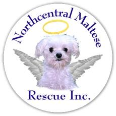 Northcentral Maltese Rescue, Inc. Logo