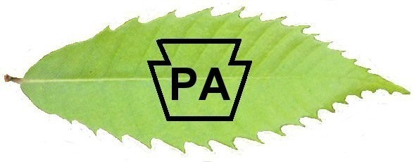 Pennsylvania Chapter of the American Chestnut Foundation Logo