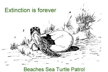 BEACHES SEA TURTLE PATROL INC Logo