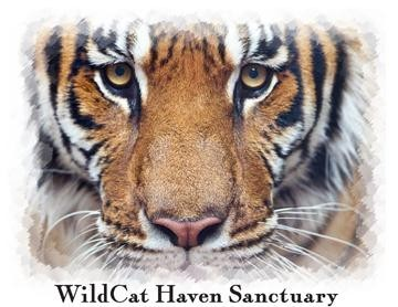 WildCat Haven, Inc. Logo