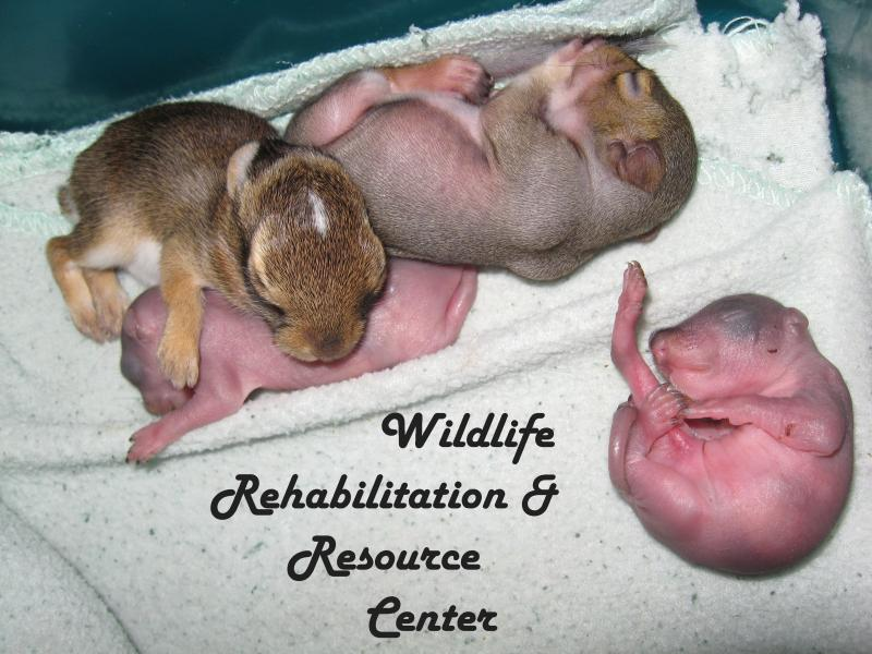 Wildlife Rehabilitation & Resource Center Inc Logo