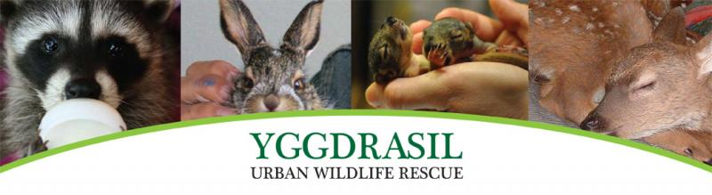 Yggdrasil Urban Wildlife Rescue Logo