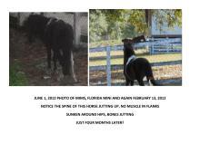 Horsesisters & Associates Inc