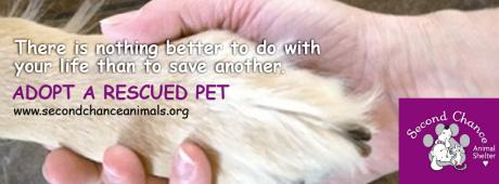 SECOND CHANCE ANIMAL SHELTER INC