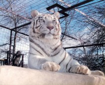 INTERNATIONAL EXOTIC FELINE SANCTUARY INC