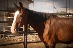 Spring Creek Horse Rescue