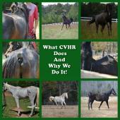 CENTRAL VIRGINIA HORSE RESCUE