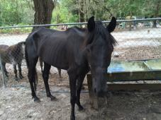Beauty's Haven Farm And Equine Rescue, Inc.