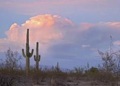 Friends Of Saguaro National Park Inc