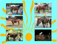 Hope Equine Rescue, Inc.