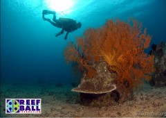 Reef Ball Foundation Inc