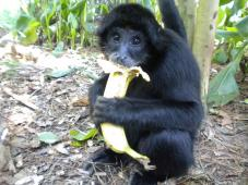 JUNGLE FRIENDS PRIMATE SANCTUARY INC