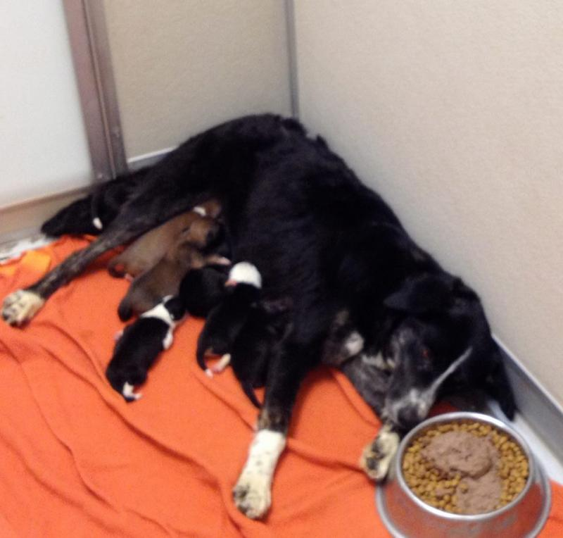 Rocky Mountain Puppy Rescue Nonprofit In Berthoud, CO